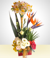 Flowers - Spring Bouquet with Birds of Paradise