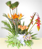 Condolence Arrangement with Alstroemerias, Birds of Paradise and Roses