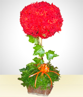Love and Romance - Flower Bud Arrangement