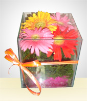 Gifts for Men - The Gebera Daisies Little Box