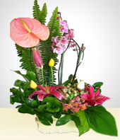 Flowers - Anturio Arrangement