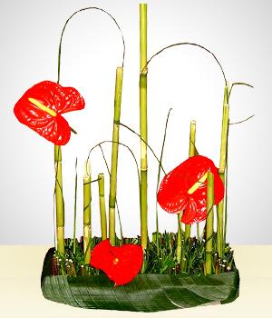 Jard n de anturios arreglos florales bolivia for Jardines de anturios