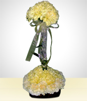 Flowers - Pure Carnations