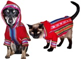 Hooded awayo kangaroo &#34Andean doggie&#34 for pet