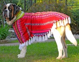 Awayo poncho for pet