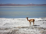 La Paz - Uyuni - La Paz (5D / 4N) - Private Service in the Salar and Lagoons