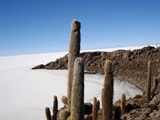 4 Days / 3 Nigths - Uyuni/Uyuni (Private Service)